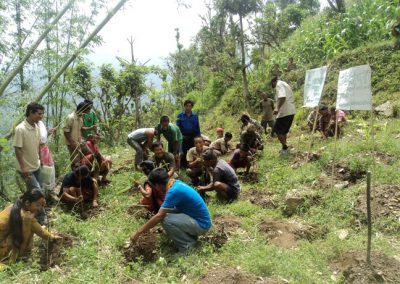plantation-in-khotang-district